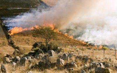 Non solo l'Amazzonia, è l'Africa che brucia maggiormente